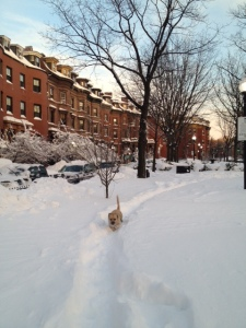 Dog running on Chester Sq.